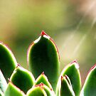 A Succulent In The Sun by AngieDavies