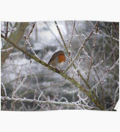 Robin and Winter Scene Poster