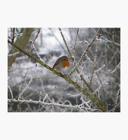 Robin and Winter Scene Photographic Print