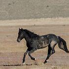 A Proud Stallion  by Nicole  Markmann Nelson