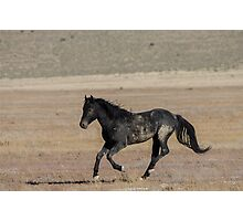 A Proud Stallion  Photographic Print