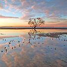 The Dawn Tree - Victoria Point by Beth  Wode