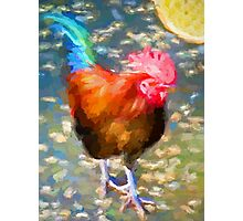 Little Blue and Red Rooster Photographic Print