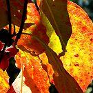 Fall Walk in my Neighborhood -CloseUp by ctheworld