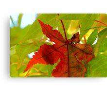 Fall Walk in my Neighborhood -CloseUp     ^ Canvas Print