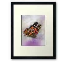 Wings of beauty Framed Print