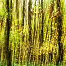 Woodland Abstract. One of Three. by Maybrick