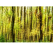 Woodland Abstract. One of Three. Photographic Print