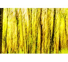 Woodland Abstract. Two of Three. Photographic Print