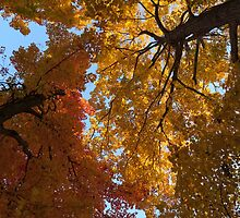 A Vibrant Autumn Duet by Georgia Mizuleva