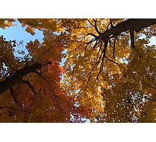 A Vibrant Autumn Duet Photographic Print