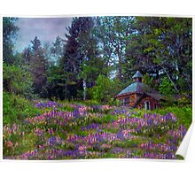 A Riot of Lupine Outside the Cabin  Poster