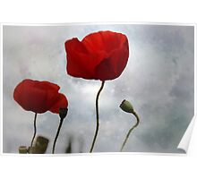 ...... where the poppies blow Poster