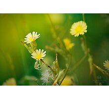 Green Blossom  Photographic Print