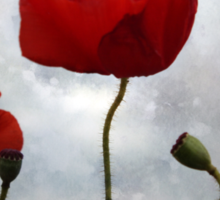...... where the poppies blow Sticker