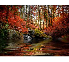 Just Drem Along ~ Fall Colors ~ Photographic Print