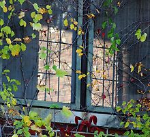 Autumn Vines and Windows by Gilda Axelrod