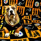 Pitbull Rescue Dog Football Fanatic by Shelley Neff