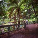 Whakarewarewa Forest by Linda Cutche