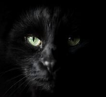 dark side of the snoop by meowscott