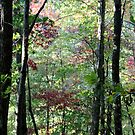 Autumn Pink In The Forest by Asoka
