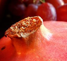 Macro of a Pomegranate by Sandra  Aguirre