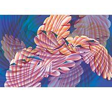 Schizophyllum Commune Photographic Print