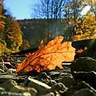 Falling Leaves Among The Tracks by Geno Rugh