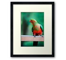 Curious Young Man... Framed Print