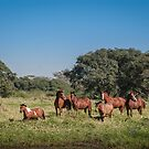 Wild Horses - El Rancho, Brazil by Eric Cook