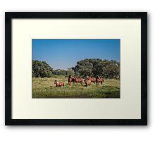 Wild Horses - El Rancho, Brazil Framed Print