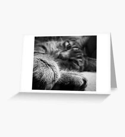 Weekend Kitty Greeting Card