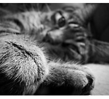 Weekend Kitty Photographic Print
