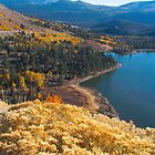 High Country Fall by Barbara  Brown