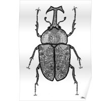 Rhino Beetle Poster