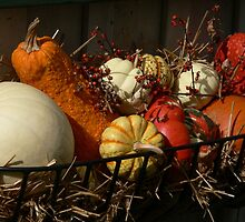 Orange in the Fall by Larry Lingard-Davis