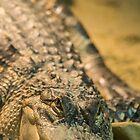 Saltwater Crocodile - Ballarat Wildlife Park by forgantly