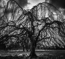 A Winter Tree in B&W by Ludwig Wagner