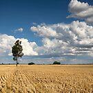 Trundle plains by David Haworth
