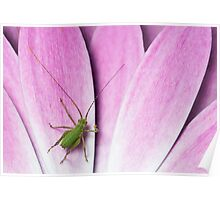 Baby cricket Poster