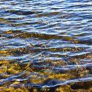 Water Concerto 2 by Danuta Antas