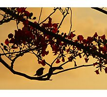Evening Birdsong Photographic Print