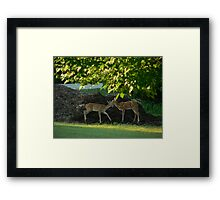 Fawning over you Framed Print