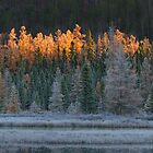 Frosty morning in Algonquin Park by Jim Cumming
