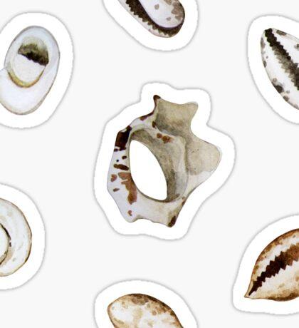 Collection of small watercolor seashells  Sticker