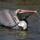 Pelican that comes with Running Water by imagetj