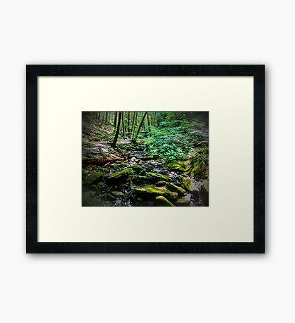 Forests depth Framed Print