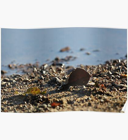 An autumn leaf on a rocky shore Poster