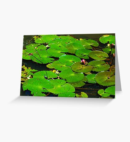 Lilies - Philippines Greeting Card