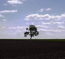 Lone Tree by Timothy  Ruf